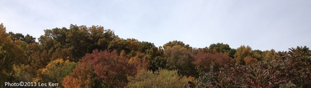 Trees beginning to turn colors in Nashville's Bellevue area.